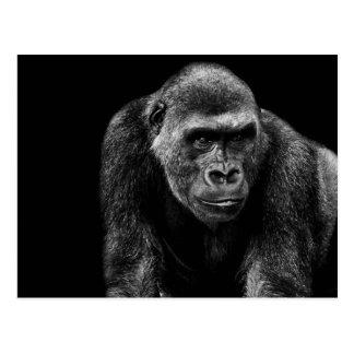 Gorilla Ape Primate Wildlife Animal Photo Postcard