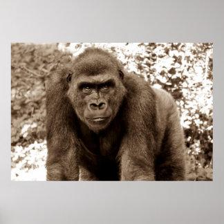 Gorilla Ape Primate Wildlife Animal Photo Posters