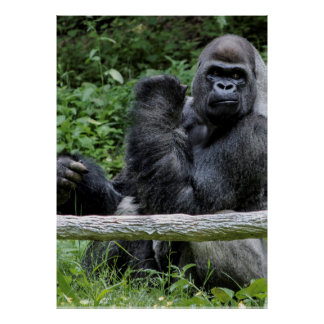 Gorilla Ape Primate Wildlife Animal Photo Poster