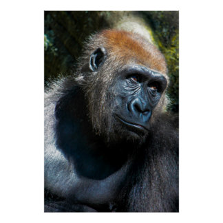 Gorilla Ape Primate Wildlife Animal Photo Print