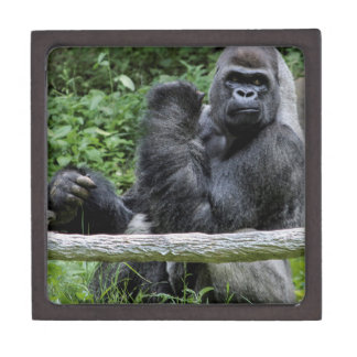 Gorilla Ape Primate Wildlife Animal Photo Premium Jewelry Box