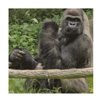 Gorilla Ape Primate Wildlife Animal Photo Wood Print