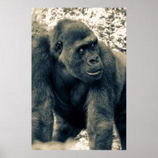 Gorilla Ape Primate Wildlife Photo Print