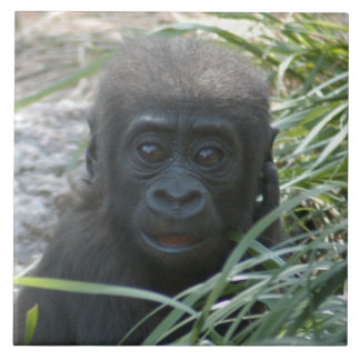 gorilla-baby10x10 ceramic tiles