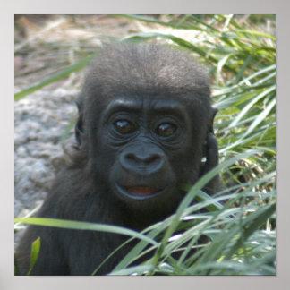 gorilla-baby10x10 impresiones