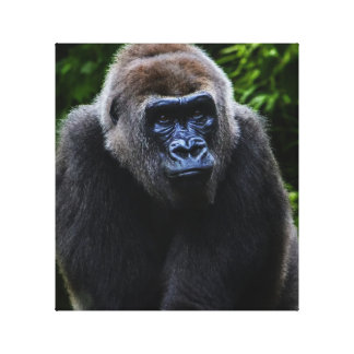 Gorilla Canvas Prints