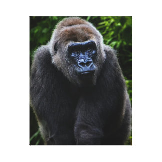 Gorilla Stretched Canvas Print