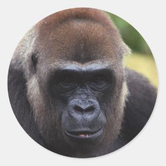 Gorilla Close-Up Classic Round Sticker