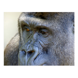 Gorilla Closeup Postcard