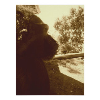 Gorilla Dreams Poster