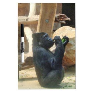 Gorilla eating his lunch, Animal, Wildlife, Ape Dry-Erase Board