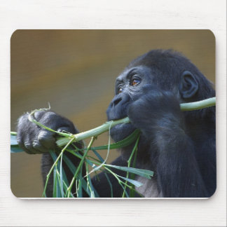 Gorilla eating mouse pad