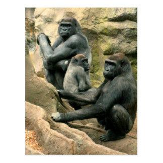 Gorilla Family Postcard