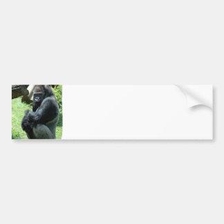 Gorilla Glare Bumper Sticker