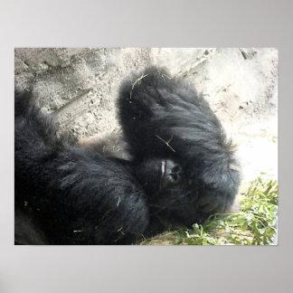 Gorilla Headache Poster
