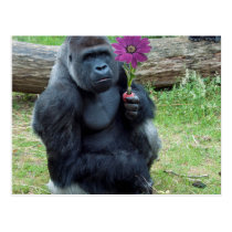 Gorilla Holding Flower Postcard