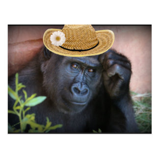 Gorilla in a straw hat, postcard