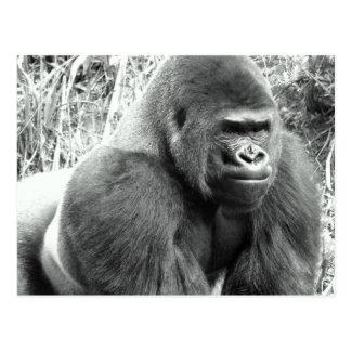 Gorilla in Black and White Postcard