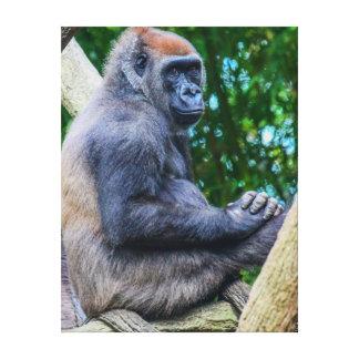 Gorilla in Tree Photo Canvas Prints