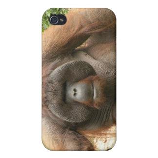 Gorilla iPhone 4 Case - Animal Photos