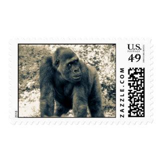 Gorilla.jpg Stamp