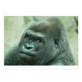 Gorilla Looking at You Postcard