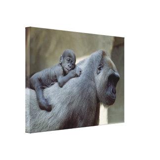 Gorilla Love Mom and Baby Canvas Print
