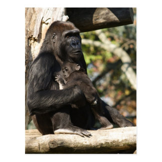 Gorilla mom and baby post cards