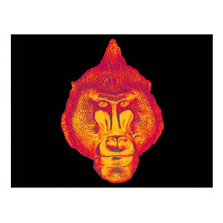 Gorilla or Ape, Close Up Face, Red and Yellow Post Cards