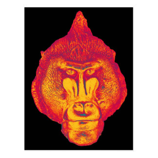 Gorilla or Ape, Close Up Face, Red and Yellow Postcard