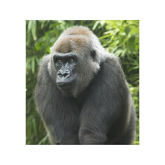 Gorilla Photo Canvas Print