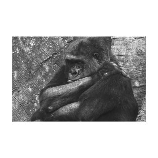 Gorilla Photo Gallery Wrap Canvas