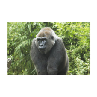 Gorilla Photo Stretched Canvas Print