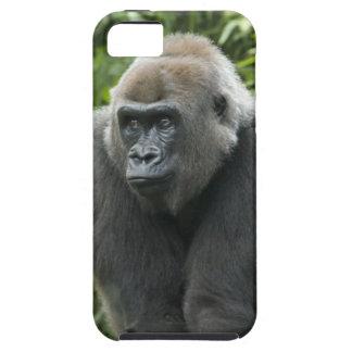 Gorilla Photo iPhone 5 Cover