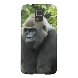 Gorilla Photo Galaxy Nexus Cover