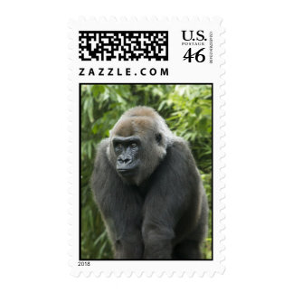 Gorilla Photo Postage Stamps