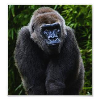 Gorilla Photo Art