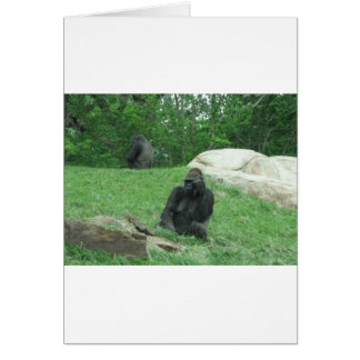 Gorilla pic card