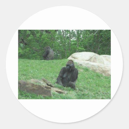 Gorilla pic classic round sticker