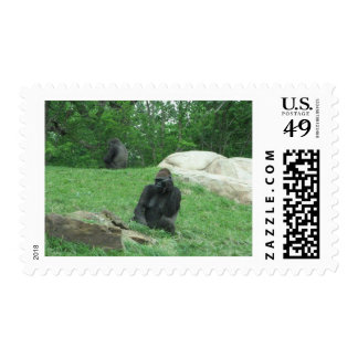 Gorilla pic postage stamp