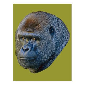 Gorilla Picture Postcard