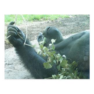 gorilla plays post cards