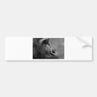 Gorilla Portrait Bumper Sticker