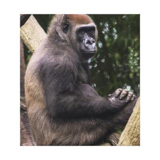 Gorilla Portrait Canvas Print