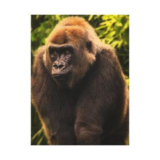 Gorilla Portrait Stretched Canvas Prints