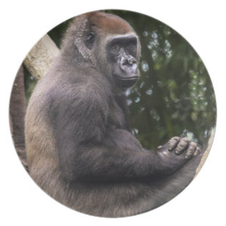 Gorilla Portrait Dinner Plates