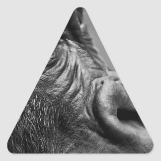 Gorilla Portrait Triangle Sticker