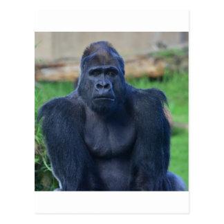 Gorilla Postcards