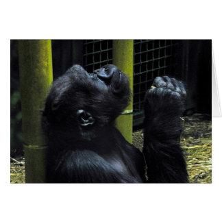 Gorilla Prayer Card