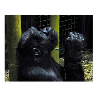 Gorilla prayer postcard
